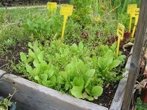 Comment diagnostiquer, se prémunir et soigner ses plantes ?