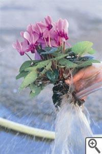 Nettoyage grossier des racines