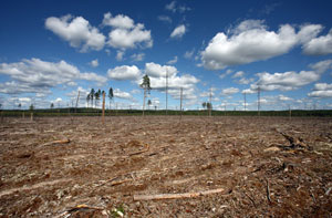 La déforestation, une menace pour l'homme et la planète