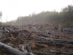 Déforestation par brûlis