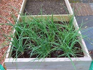 Jardinage en décembre : travaux au potager et au verger
