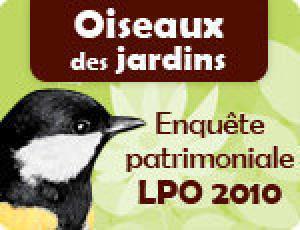 La LPO invite à un comptage des oiseaux au jardin, le 23 mai