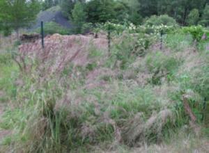 Dépolluer les sols grâce aux plantes : des résultats prometteurs