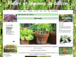 Fleurs et légumes de balcon