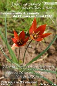 Visite de la Collection Nationale de tulipes botaniques (CCVS) - Florac - Mars 2010