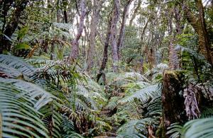 La forêt indonésienne est riche en biodiversité