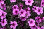 Le Conservatoire botanique national de Brest oeuvre pour la préservation de la flore menacée