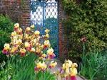 Utilisation des iris au jardin