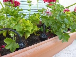 Goutte à  goutte Iriso - kit jardinière