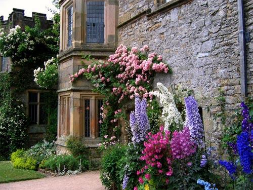 Introduction au jardin anglais for Plantes pour jardin anglais