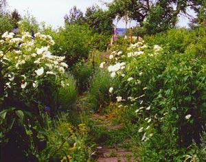 Jardin naturel ou sauvage