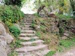 Un jardin pour mettre à l'honneur les plantes anti-cancer