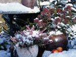 Jardinières d'hiver