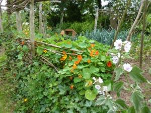 Que planter a ombre au potager - Que planter en juillet au potager ...
