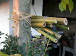 Construire un nichoir à insectes