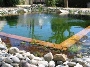 Piscine écologique : pour des baignades naturelles