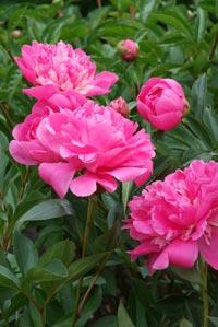Les plus belles floraisons à offrir