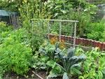 Permaculture, l'autre vision du jardin bio