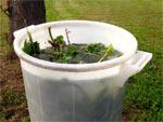 Purins de plantes et autres décoctions