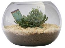 Le blog de conseils vous trouverez - Plante dans pot en verre ...