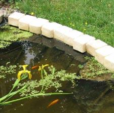 Installation des plantes aquatiques dans les poches