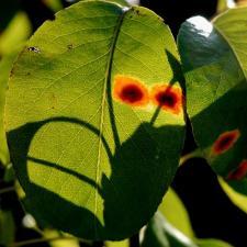 Fuchsia terre tout for Maladie plante verte interieur