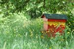 Parrainer une ruche, pourquoi pas ?