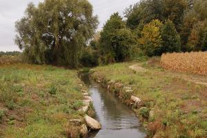 Ruisseau en bordure de champ de maïs