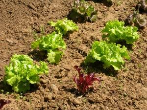 Jardinage en août : potager et au verger