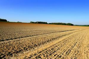 DROPS : un projet européen pour des plantes résistantes à la sécheresse