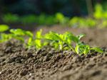 Préparer le sol avant semis ou plantations