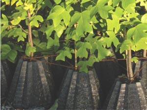 Nouveau : le starpot des pepinieres Lemonnier