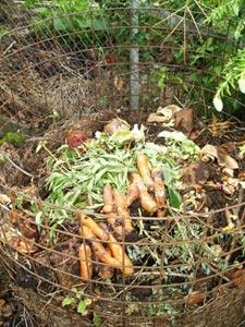 Tas de compost
