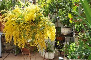 Jardinage urbain : jardiner sans jardin