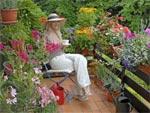 Arbustes pour terrasse fleurie