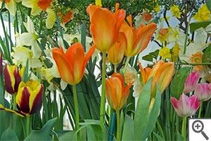 Apprenez à bien utiliser les bulbes, au jardin et dans la maison