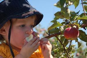 Sans pollinisateurs, pas de fruits...