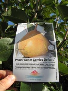 Etiquette d'un arbre fruitier