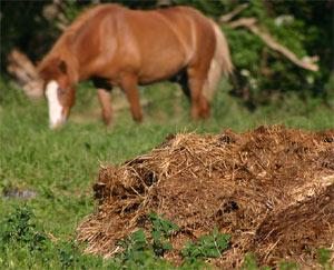 Fumier de cheval : s'en procurer, l'utiliser et précautions d'usage