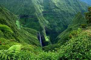 Menace sur la flore de l'île de la Réunion