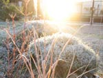Idées de massifs pour l'hiver