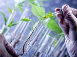 La biopiraterie ou l'appropriation du vivant
