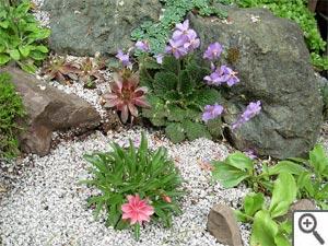Petite rocaille au jardin