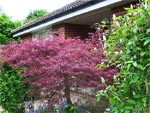 Arbre d 39 ornement tous nos sujets for Arbre feuillage persistant pour petit jardin