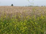 Réduction du crédit d'impôt pour les agriculteurs bio