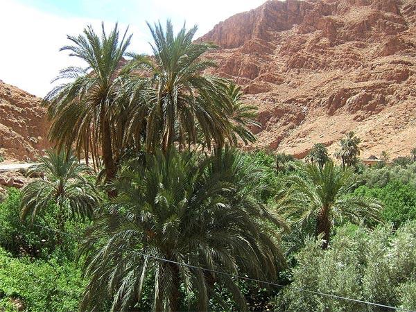 oasis картинка