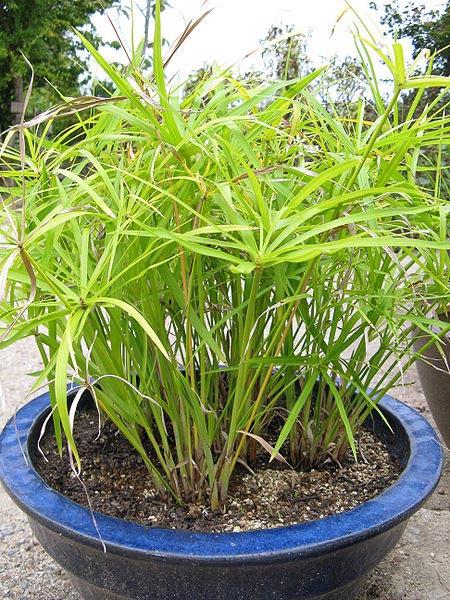 8 plantes d 39 int rieur r put es increvable ou presque for Plante exterieur toute saison