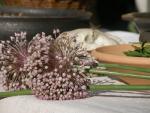 Menace sur les médicaments traditionnels à base de plantes