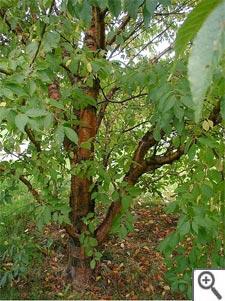 Clat baies rouge automne tout for Quel arbre pour mon jardin