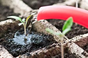 Semis de légumes